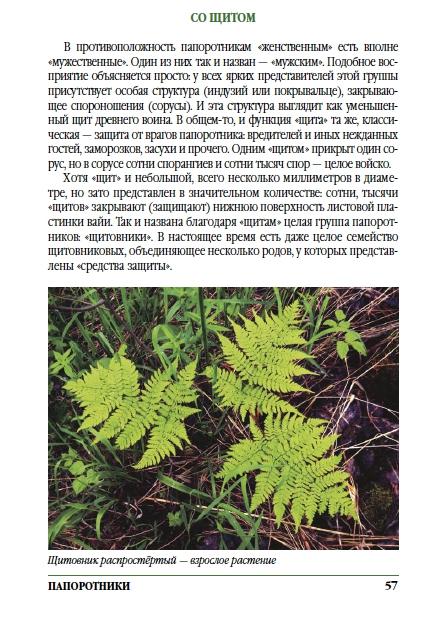 Истории о растениях Ергаков. Щиповник распростертый
